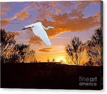 Graceful Fly By Canvas Print by Adele Moscaritolo