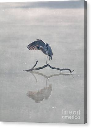 Canvas Print featuring the photograph Graceful Heron by Anita Oakley