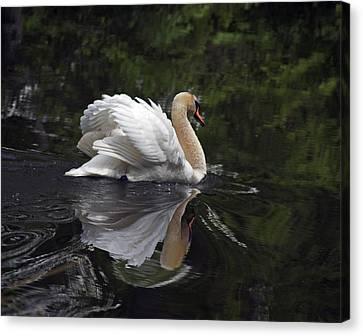Graceful Swan Canvas Print by Elsa Marie Santoro