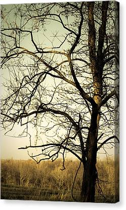 Graceful Tree Canvas Print by Cara Moulds
