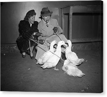 Gracie Allen And George Burns Playing With Ducks Canvas Print by Retro Images Archive