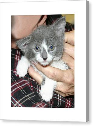 Gracie As A Kitten Canvas Print by Jack Pumphrey