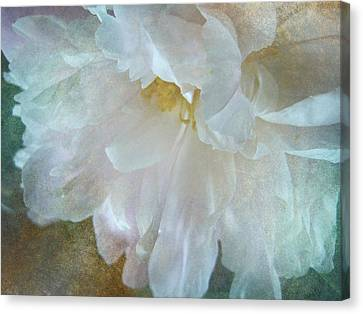 Gracious Canvas Print by Shirley Sirois