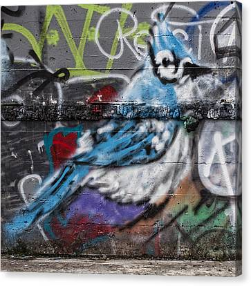 Graffiti Bluejay Canvas Print by Carol Leigh