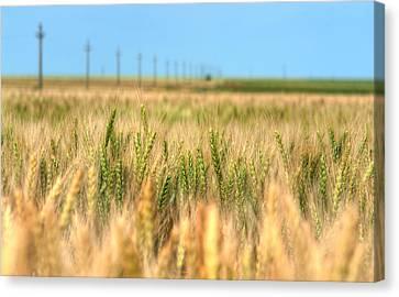Grain Field - Hdr Photo Canvas Print