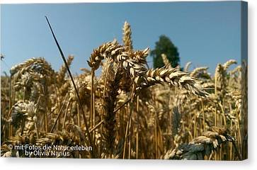 Grain Photography Canvas Print by Olivia Narius
