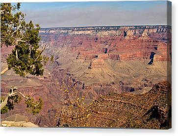 Grand Canyon 30 Canvas Print by Douglas Barnett