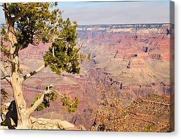 Grand Canyon 31 Canvas Print by Douglas Barnett