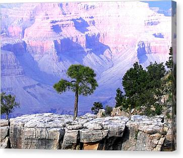 Grand Canyon 73 Canvas Print by Will Borden