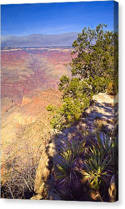Grand Canyon Cliff Canvas Print by Douglas Barnett