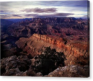 Grand Canyon Golden Ridgeback Canvas Print