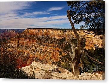 Grand Canyon Golden Rocks Canvas Print