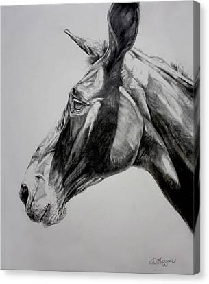Grand Canyon Mule Canvas Print by Derrick Higgins