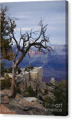 Grand Canyon Overlook Canvas Print by Barbara R MacPhail