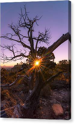 Grand Canyon Sunrise Canvas Print by Michael J Bauer
