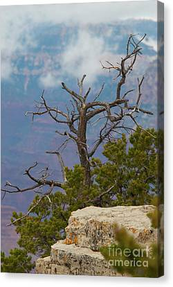 Canvas Print featuring the photograph Grand Canyon Tree by Rod Wiens