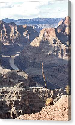 Grand Canyon Canvas Print by Yosi Cupano