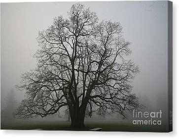 Grand Oak Tree Canvas Print