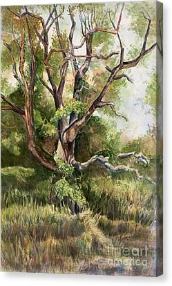 Grand Old Tree Canvas Print by Janet Felts