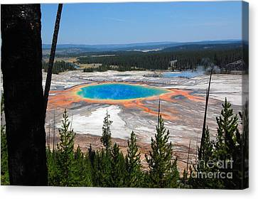 Grand Prismatic Spring From Hillside Canvas Print by Debra Thompson