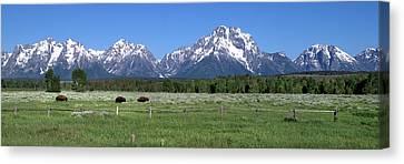 Grand Teton Buffalo Canvas Print by Brian Harig