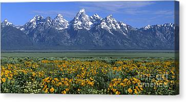 Grand Teton Summer Canvas Print by Sandra Bronstein