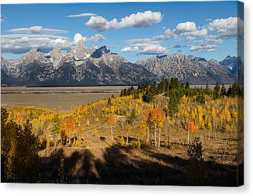 Fir Trees Canvas Print - Grand Tetons In Autumn by Kathleen Bishop