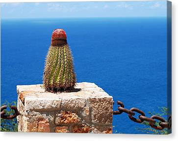 Grand Turk Cactus Canvas Print