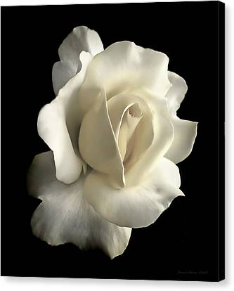 Canvas Print featuring the photograph Grandeur Ivory Rose Flower by Jennie Marie Schell