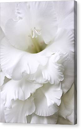 Grandiose White Gladiola Flower Canvas Print by Jennie Marie Schell