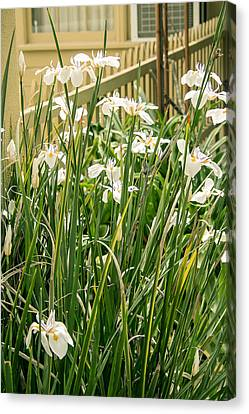 Grandpa's Lilies Canvas Print by Jan Davies