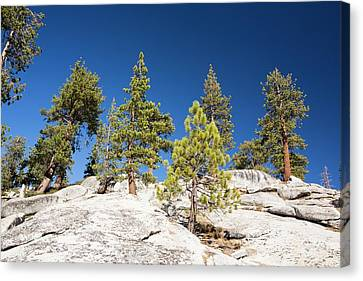 Granite Outcrop Canvas Print by Ashley Cooper