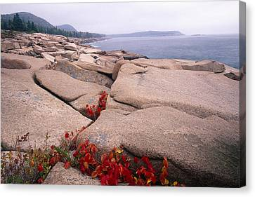 Granite Rocks Of Otter Point Acadia Natl Park Maine Canvas Print by George Oze