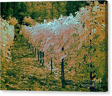 Grape Harvest, Umbria, Italy Canvas Print by Tim Holt