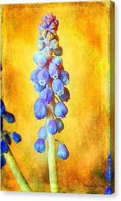 Grape Hyacinth Canvas Print by Bellesouth Studio
