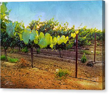 Grape Vine In The Vineyard Canvas Print by Shari Warren