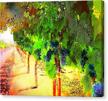 Grape Vines Canvas Print by Cindy Edwards