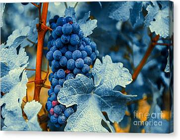 Grapes - Blue  Canvas Print by Hannes Cmarits