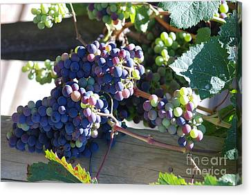 Canvas Print featuring the photograph Grapes by George Mount