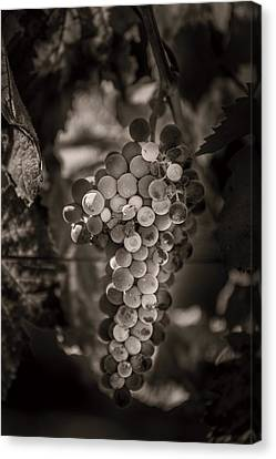 Grapes In Grey 3 Canvas Print by Clint Brewer