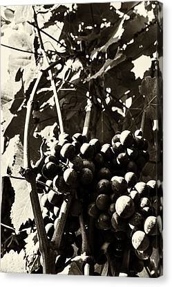 Grapes In Sepia Canvas Print by Georgia Fowler