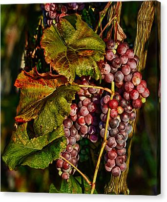 Morning Sun On Vines Canvas Print - Grapes In The Morning Sun by Martin Belan
