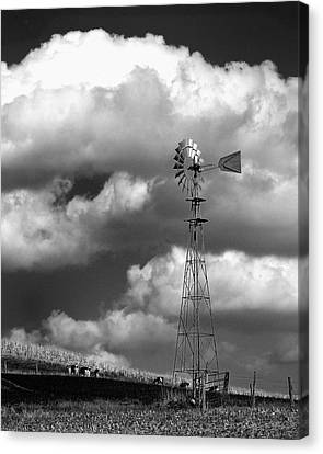 Grapes Of Wrath Canvas Print by Dick Wood