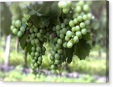 Grapes On A Vine Canvas Print by Georgia Fowler