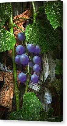 Grapes On The Vine Canvas Print by Brian Wallace