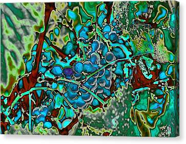 Grapes On The Vine Canvas Print by David Patterson