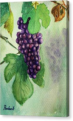 Grapes On The Vine Canvas Print by Prashant Shah
