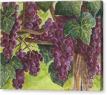 Grapes On The Vine Canvas Print by Sheryl Heatherly Hawkins