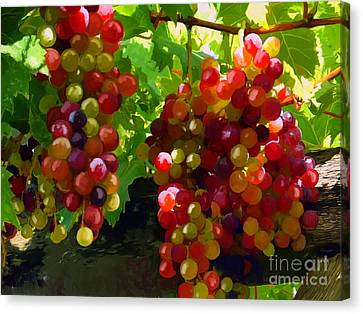 Grapes On The Vine Canvas Print by Tim Gilliland