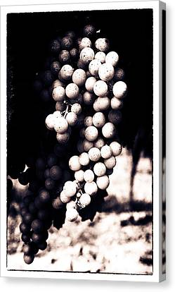 Grapes On The Vine - Toned Canvas Print by Georgia Fowler